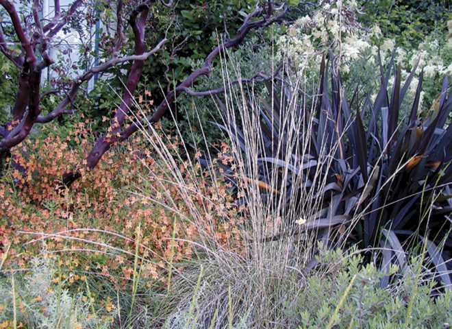 A mahagony-trunked manzanita (Arctostaphylos manzanita) dominates the front garden; a New Zealand flax (Phormium) echoes its colors, while monkey flowers (Mimulus) and deer grass (Muhlenbergia rigens) brighten the scene in spring. Photographs by Terrel Brand