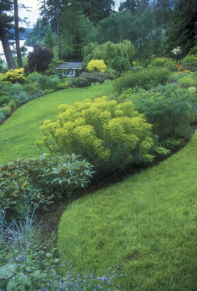 View from the living room, showing the strong, clean curving lines that have evolved in the shape of the beds; euphorbias and hellebores dominate in the foreground