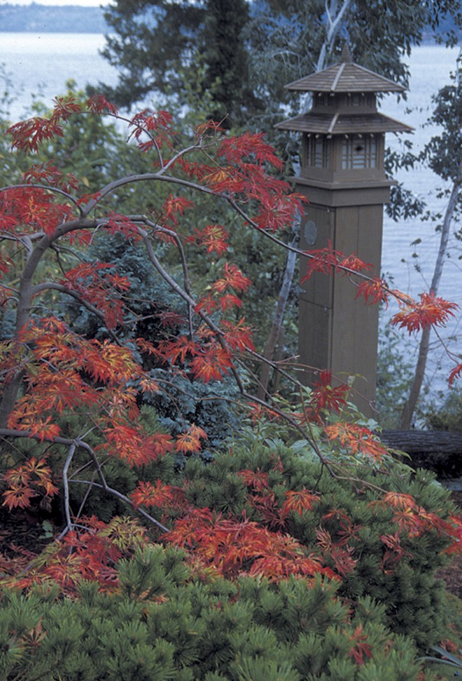 View from a living room window in autumn, with the brilliant leaves of a Japanese maple (Acer palmatum) sparkling against conifer foliage and framing the Japanese inspired birdhouse
