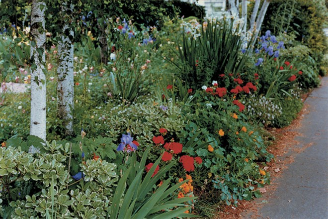 The Frybergers' front garden overflows with spring flowers and strong foliage. Photograph by Barbara Worl