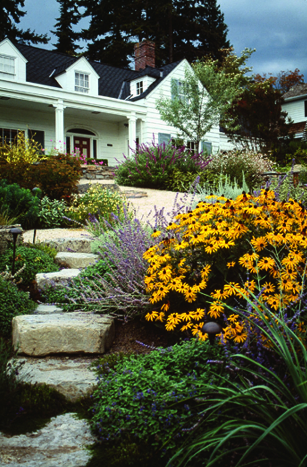 Rustic Rock Steps Give Structure To A Loose Arrangement Of Plants,  Including Rudbeckia Fulgida U0027
