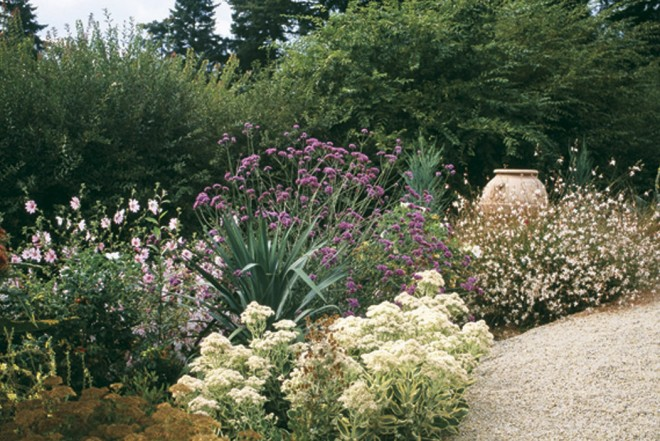 A gravel path edges a mixed border with yarrow (Achillea), Verbena bonariensis, Gaura lindheimeri, and Sedum 'Autumn Joy' - See more at: http://www.pacifichorticulture.org/articles/a-mediterranean-garden-in-seattle/#sthash.BkMnmHyE.dpuf