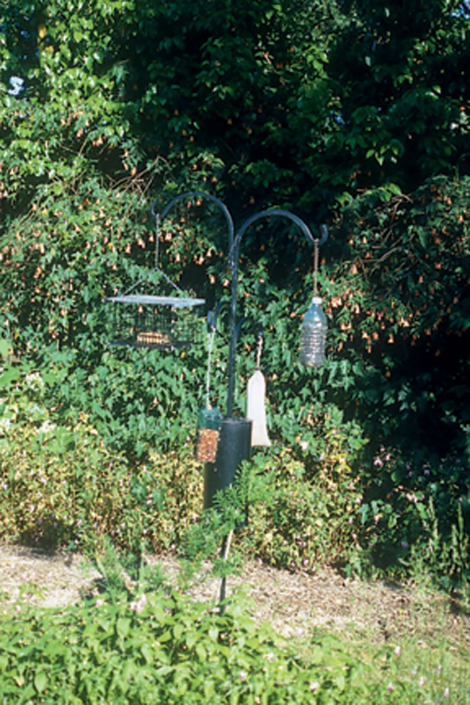 Assorted food hung on a squirrel-proof pole; in the background is a flowering maple (Abutilon) that provides nectar for hummingbirds through much of the year - See more at: http://www.pacifichorticulture.org/articles/thanks-to-our-feathered-friends/#sthash.1v55F2xa.dpuf