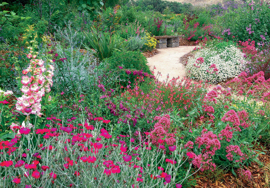 Lychnis Coronaria And Centranthus Ruber Appeal To Butterflies
