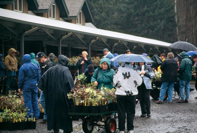 A flurry of shopping, with carts full of hellebores, at a Heronswood Nursery Hellebore Garden Open. Photographs by Dan Hinkley