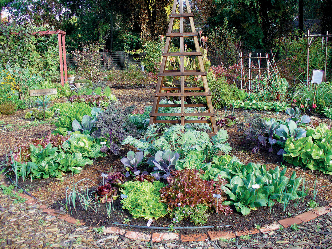 Elegant The Central Bed Of The Edible Garden, Filled With A Variety Of Winter Greens