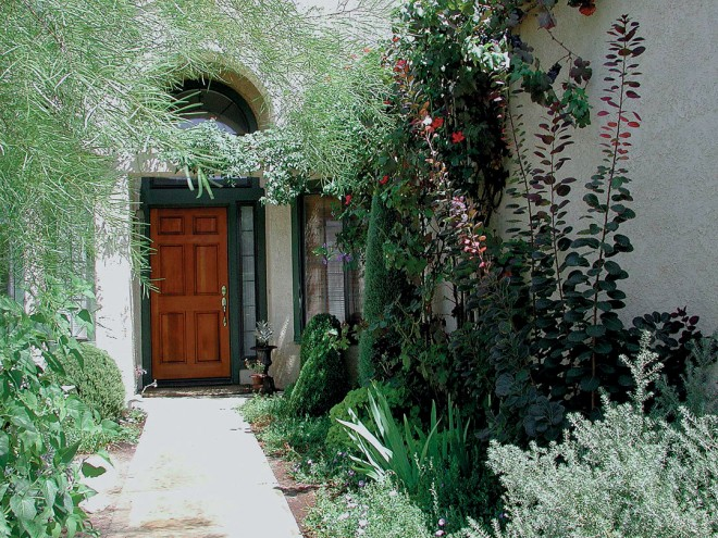 The front entry garden with Acacia cognata overhead, Cotinus 'Grace' on the right, and shaped boxwood flanking the door. Photographs by Jeff Cameron