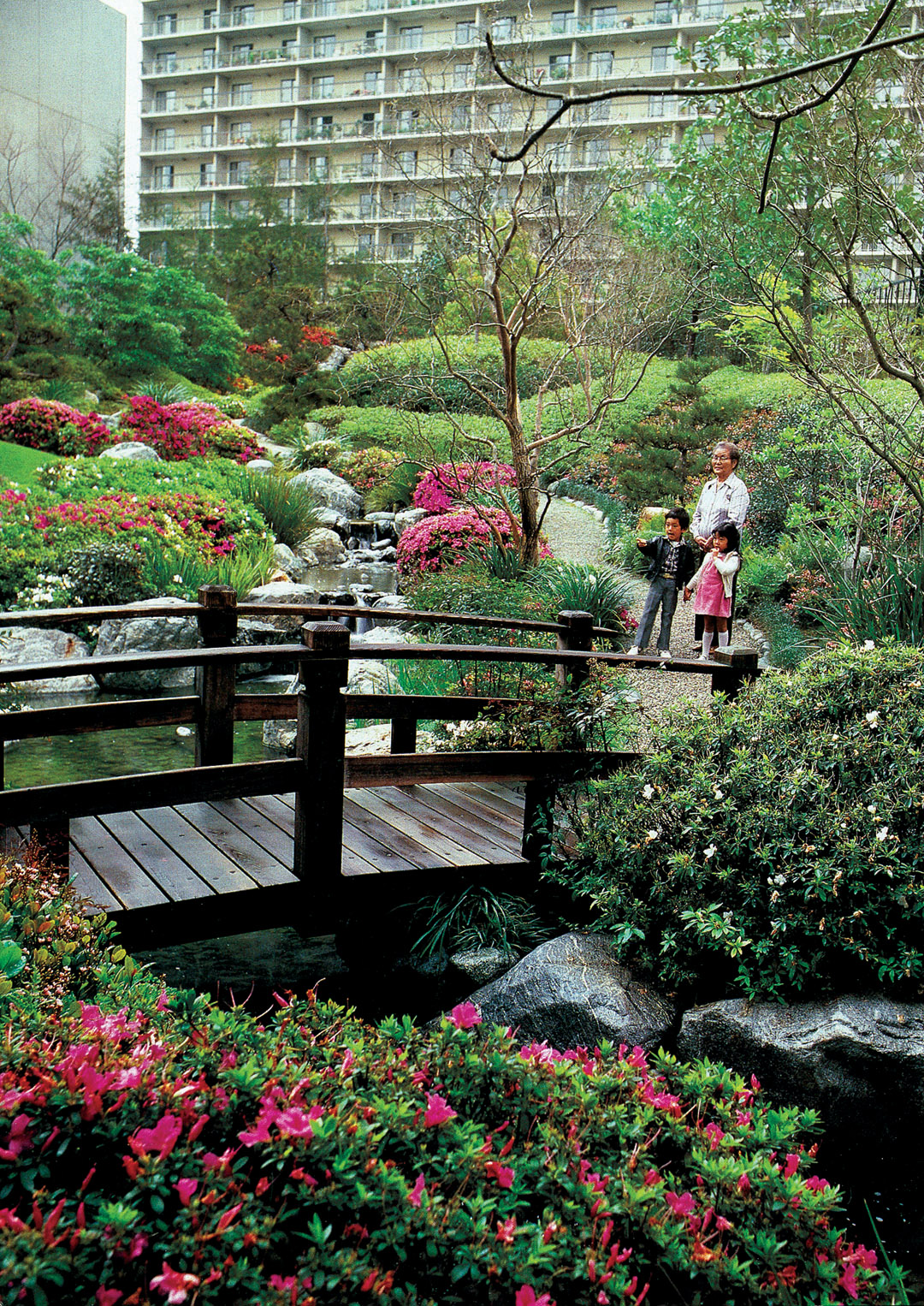 Pacific horticulture society california japanese style for Japanese garden plans and plants