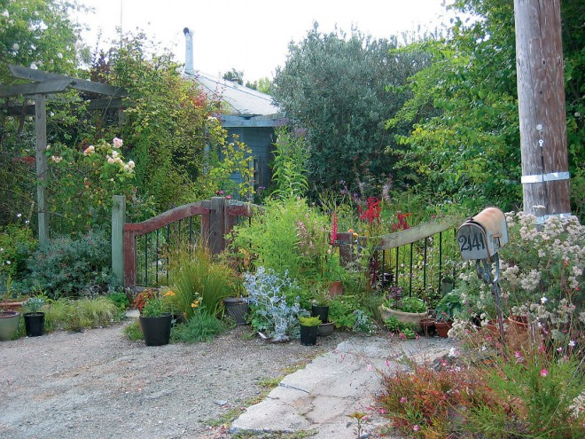 The rose arbor and welcoming gate at the entrance to Barbara Worl's garden on a quiet cul-de-sac in Menlo Park—her rustic outpost in the midst of Silicon Valley; apricotcolored Rosa 'Buff Beauty' flowers on the arbor; a silvery sea holly (Eryngium sp.) seeds itself throughout the garden - See more at: http://www.pacifichorticulture.org/articles/barbara-worl-a-profile/#sthash.4RgQQnWw.dpuf