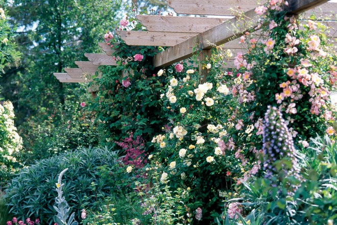 A wealth of roses tumble on, over, and around the arbor: (from left) pink 'Constance Spry', pale yellow 'Danaë', and yellow and pink 'Pink Mermaid'. Photograph by William Grant - See more at: http://www.pacifichorticulture.org/articles/barbara-worl-a-profile/#sthash.4RgQQnWw.dpuf