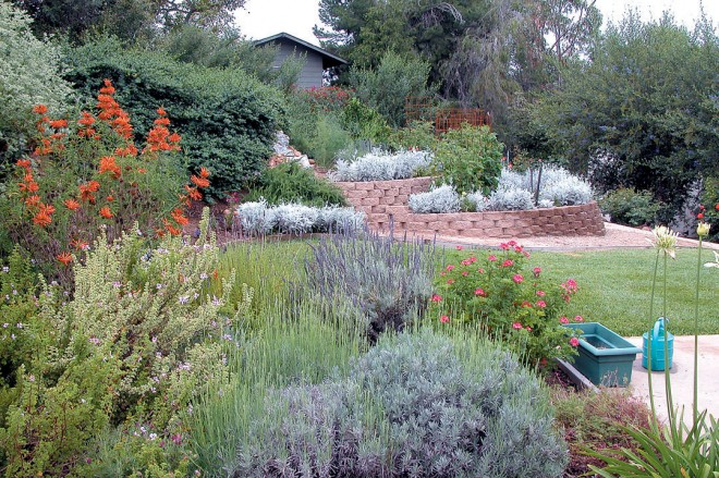 An established landscape mixing California natives with plants from other mediterranean climates. Author's photographs - See more at: http://www.pacifichorticulture.org/articles/landscaping-with-natives-in-san-diego/#sthash.FrGOIf7v.dpuf