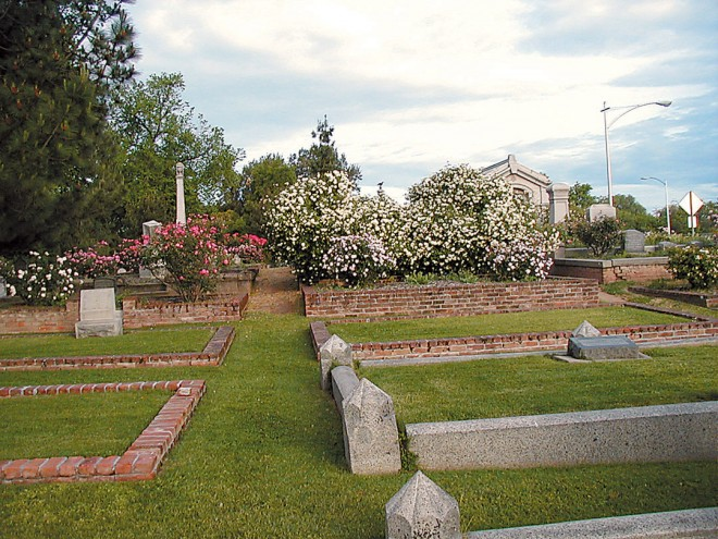 "Historic Rose Garden, Old City Cemetery, Sacramento, with (front row from left) 'Les Pactole' (white), 'Gloire des Rosomanes' (pink), and two plants of a pale pink found rose (""Dr Peck's Smoothie"") in front of a massive specimen of 'Climbing White Maman Cochet'. Photographs by Christeen Tweet/Justourpictures.com, except as noted - See more at: http://www.pacifichorticulture.org/articles/sacramentos-historic-rose-garden/#sthash.FoT0pU0Q.dpuf"