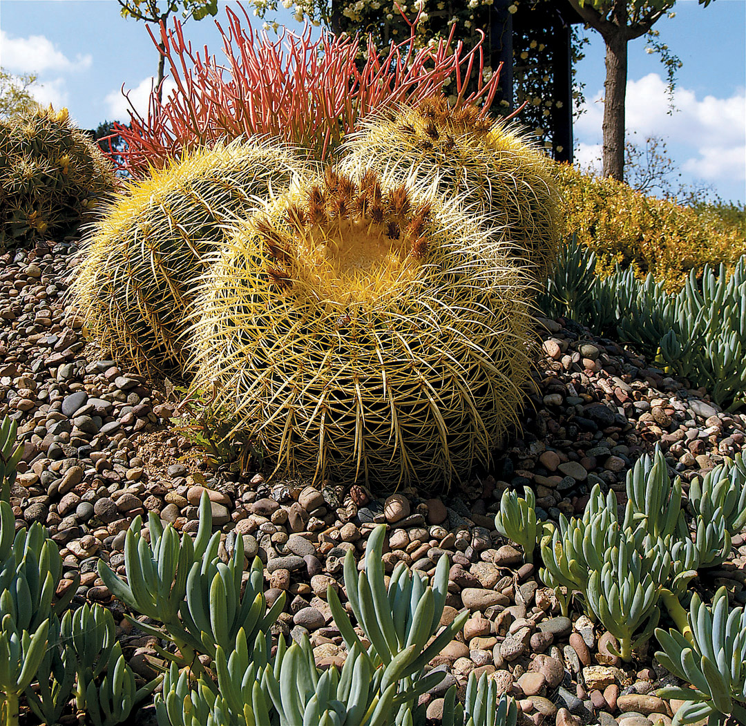 Pacific Horticulture Society | A Cactus Garden Takes Shape