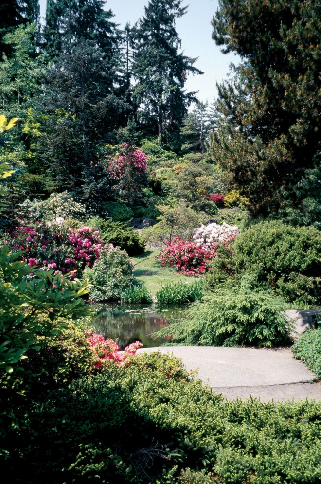 Bright rhododendrons in full flower make our eyes dance back and forth as we look up into this space, subtly altering our perception of its shape and size with the seasons (Kubota Garden, Seattle). Author's photographs - See more at: http://www.pacifichorticulture.org/articles/making-gardens-seem-bigger-part-ii/#sthash.UkjxOBix.dpuf