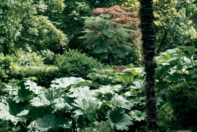 Bold textures in the foreground contrast with the finer textured background, emphasizing the depth and apparent size of this space - See more at: http://www.pacifichorticulture.org/articles/making-gardens-seem-bigger-part-ii/#sthash.UkjxOBix.dpuf