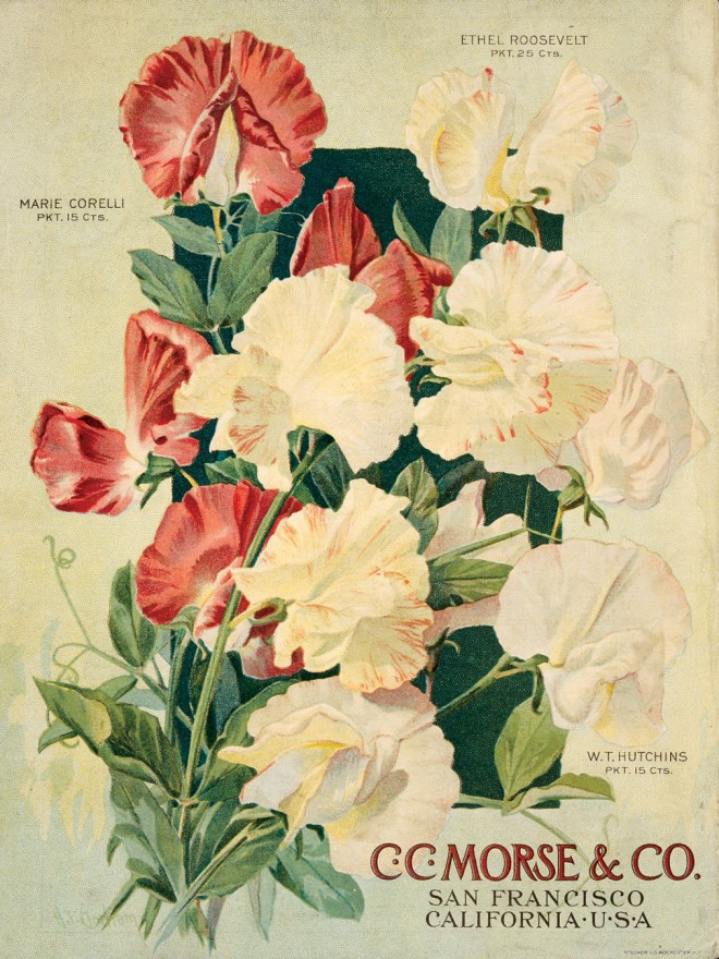 Sweet peas grace the back cover of Morse's Garden Book, 1911. Photograph courtesy California Historical Society - See more at: http://www.pacifichorticulture.org/articles/sweet-peas-in-california-a-fragrant-but-fading-memory/#sthash.lP39eMOh.dpuf
