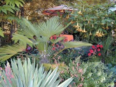 A private deck amidst the bold subtropical foliage in the author's garden. Author's photographs