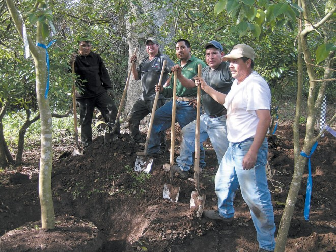 Foreman Andres Elias and the talented crew of diggers from William Chiappa Fields, Portland, Oregon - See more at: http://www.pacifichorticulture.org/articles/a-half-century-of-camellias-find-a-new-home/#sthash.NFMsH7Ts.dpuf