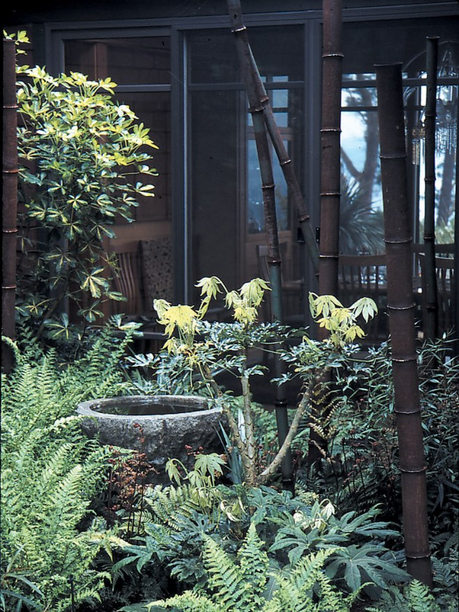 A protected corner on the lee side of the house, sheltering ferns and tender Asian shrubs