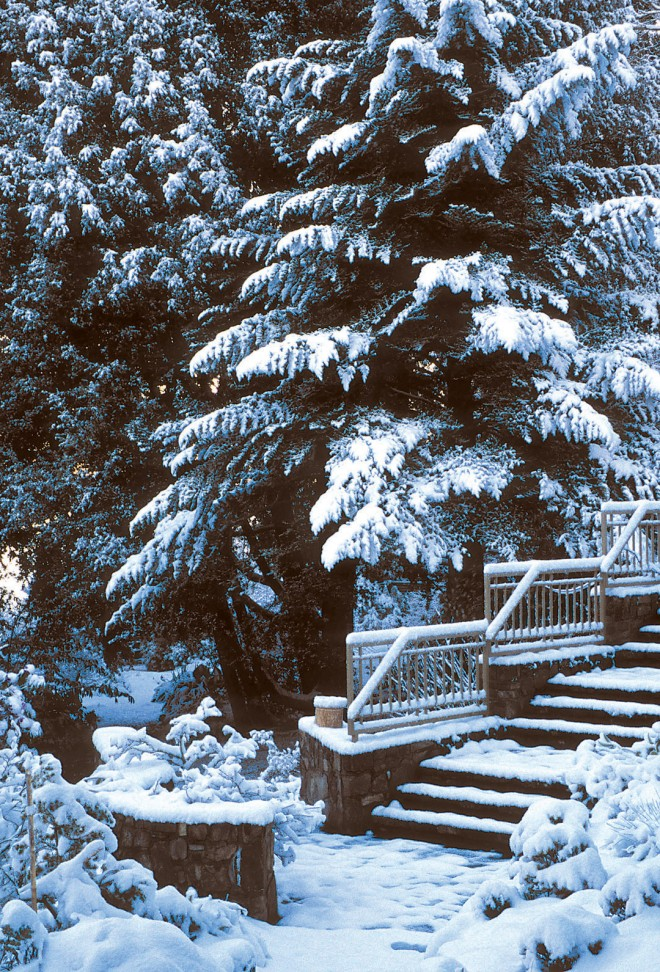 Despite seemingly warming climate patterns, some recent winters along parts of the West Coast have been extremely cold; here, an unusually heavy snowfall blankets the Miller Botanical Garden in Seattle in November 2007. Photograph by Richie Steffen