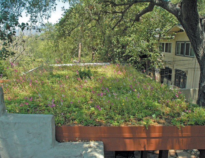 Patio cover green roof with sedums and wildflowers in Altadena, California. Photograph by Bronwyn Miller; design by Flower to the People