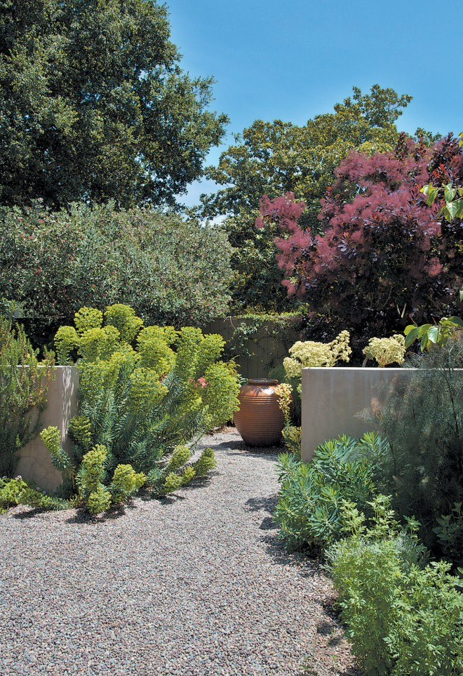 Low walls in the side courtyard frame a bubbling terracotta foun- tain; chartreuse Euphorbia rigida and purple smoke tree (Cotinus coggyria 'Purpurea') color the spring garden