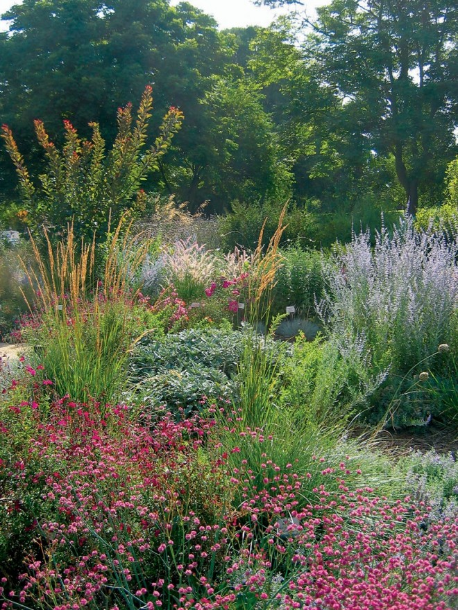 Tawny grass plumes, buckwheat (Eriogonum), salvias, lavenders, and Russian sage (Perovskia) carry the garden's floral display into the heat of the summer - See more at: http://www.pacifichorticulture.org/articles/the-ruth-risdon-storer-garden-evolution-of-a-valley-wise-garden/#sthash.9xwzSEj3.dpuf
