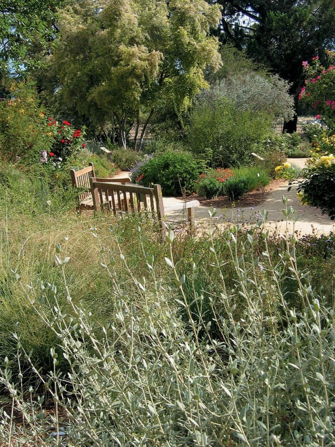 The silvery stems of bush germander (Teucrium fruticans, in the foreground) frame the edges of the Storer Garden - See more at: http://www.pacifichorticulture.org/articles/the-ruth-risdon-storer-garden-evolution-of-a-valley-wise-garden/#sthash.9xwzSEj3.dpuf
