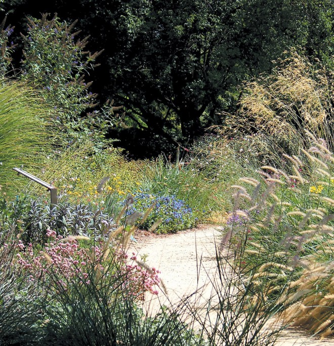 Grasses sparkle in the sunlight from summer through fall. Photograph by Andreah Wallace - See more at: http://www.pacifichorticulture.org/articles/the-ruth-risdon-storer-garden-evolution-of-a-valley-wise-garden/#sthash.9xwzSEj3.dpuf