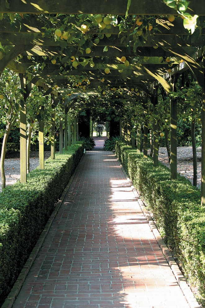 The 'Eureka' lemon arbor at Lotusland