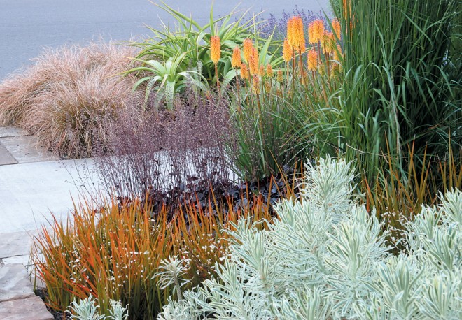 The variegated foliage of Euphorbia characias 'Tasmanian Tiger' contrasts with the rich colors of orange-leafed Libertia perigrinans 'Bronze Sword', plum-colored Heuchera 'Obsidian', and the orange-sherbet flowers of Kniphofia 'Shining Sceptre'