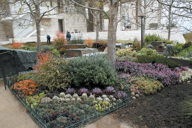 An array of succulents fills the author's favorite corner at the top of the Central Garden's stream in winter