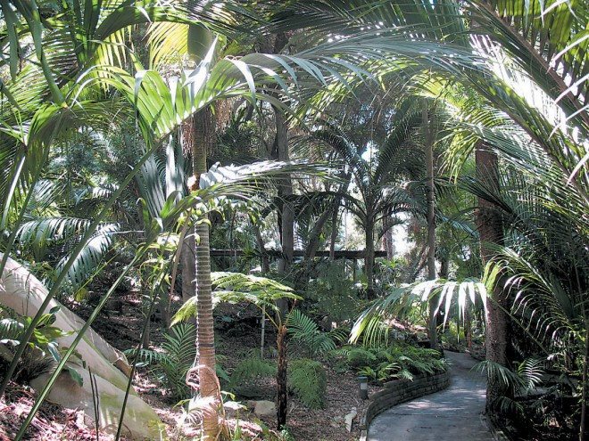 The palm garden, filled with more than forty species of palms from tropical regions around the world