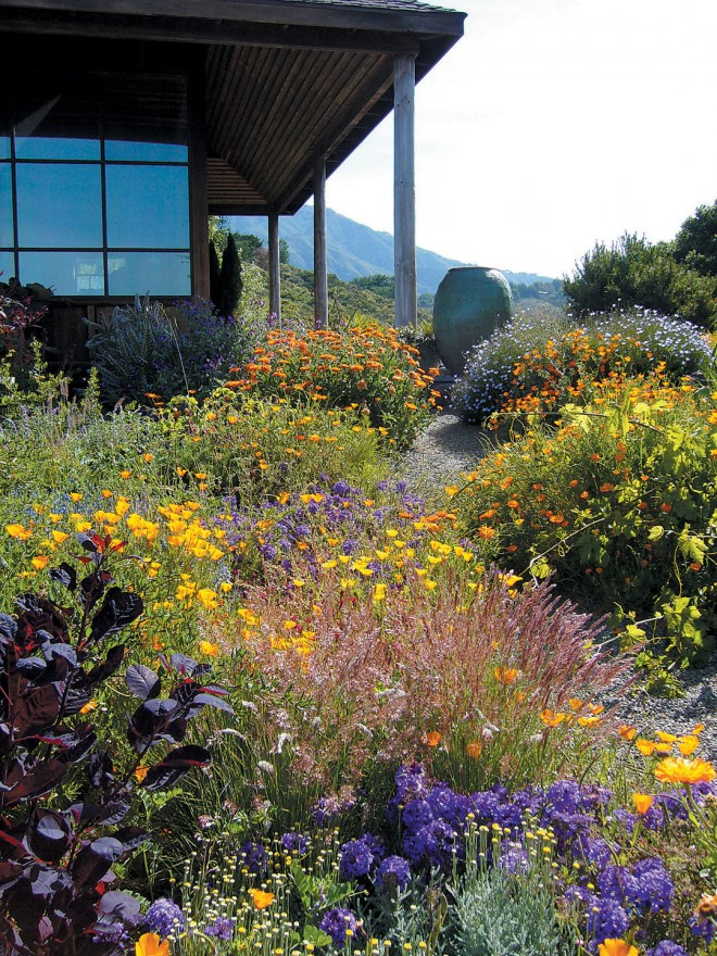 With careful irrigation, this garden of verbena, poppies, and daisies continues flowering through summer, while serving to reduce the risk of fire reaching the house