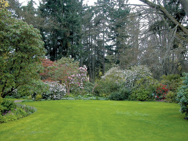 The woodland garden in spring, rhododendrons stealing the show beneath a canopy of trees, both deciduous and evergreen