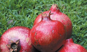 Pomegranates, showing the flared calyx that served as a model for the now-traditional royal crown