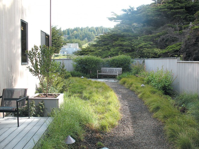 Enclosed side garden with wind-sheared ceanothus behind the bench; flowering currant (Ribes sanguineum) against the fence; giant chain fern (Woodwardia fimbriata), coffeeberry (Rhamnus californica 'Eve Case'), and shore pine (Pinus contorta) against the house; groundcover of mown sand-dune sedge (Carex pansa) and unmown foothill sedge (Carex tumulicola)
