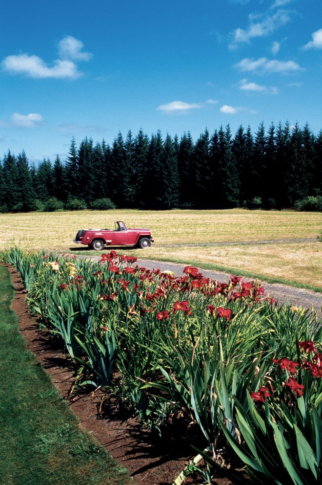 Douglas-fir forests and agricultural fields provide the backdrop for the gardens at Kinzy Faire; in the foreground, the Orphan Garden, filled with bearded iris and daylilies (Hemerocallis). Author's photograph