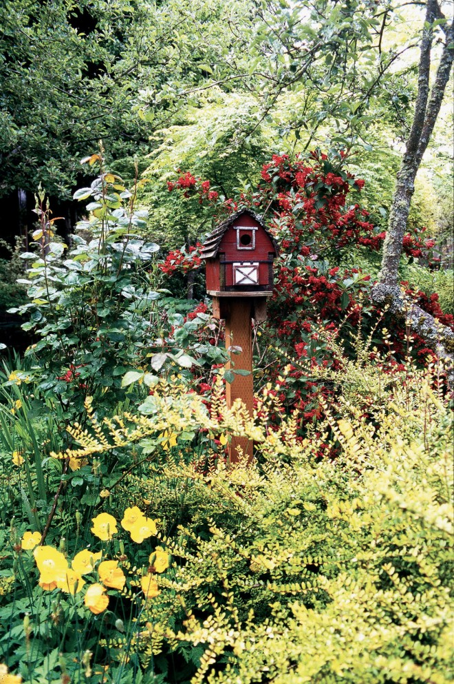 A Millie-made bird barn with Weigela 'Bristol Ruby' behind, Lonicera nitida 'Baggeson's Gold' and Welsh poppy (Meconopsis cambrica) in front. Author's photograph