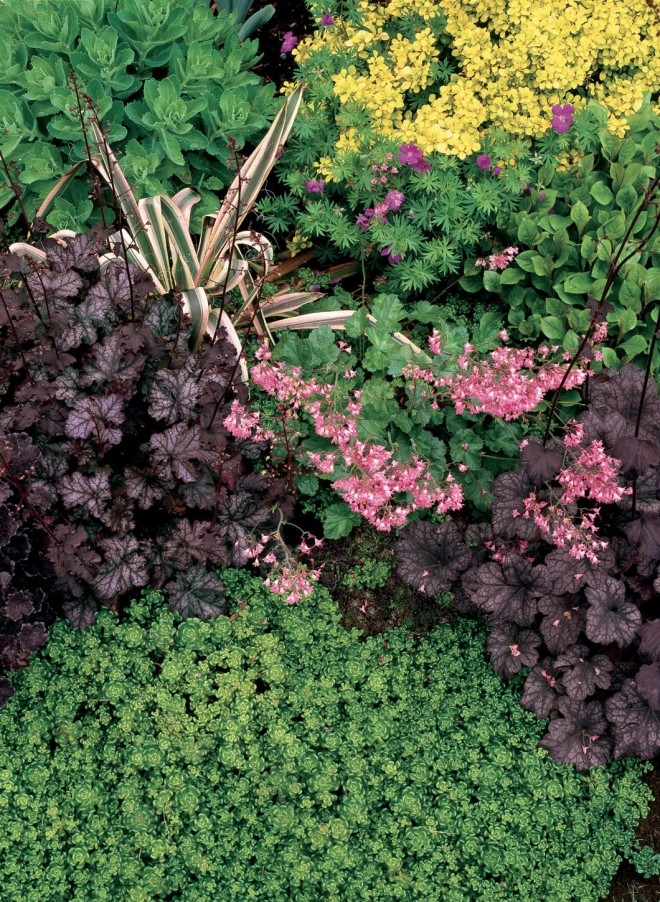 A small vignette with deeply colored leaves of a Heuchera cultivar and various sedums