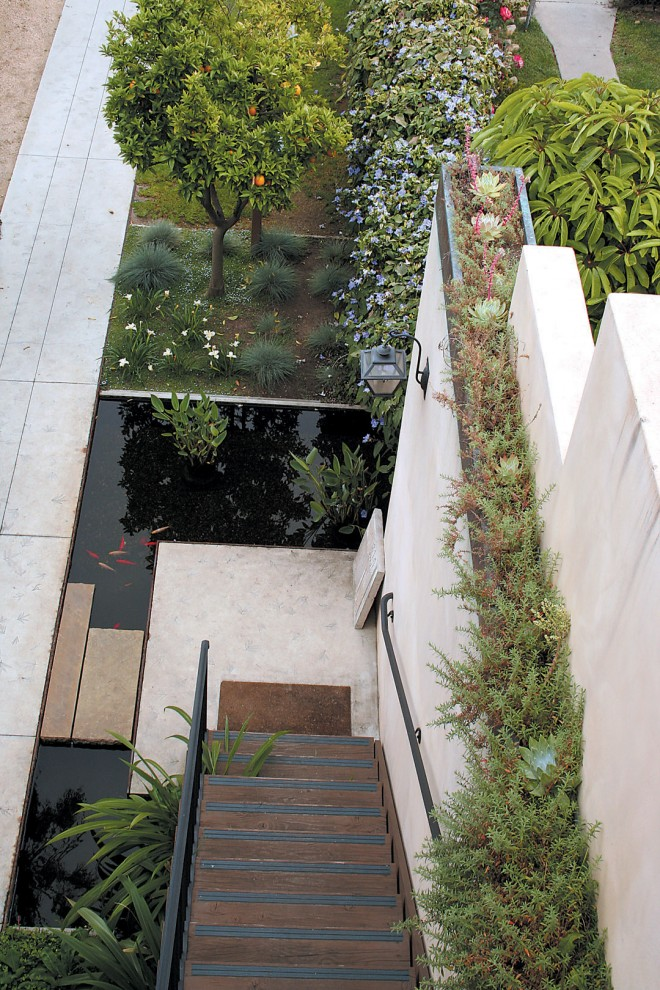 A view from the roof reveals the plan of the courtyard: a pond fills much of the space that was unplantable due to the building's foundation; citrus trees provide fragrance and edible fruit; California fuchsia (Epilobium cana) and chalk dudleyas (Dudleya pulverulenta) fill a narrow planter atop the wall. Photograph by Jessica Harlin