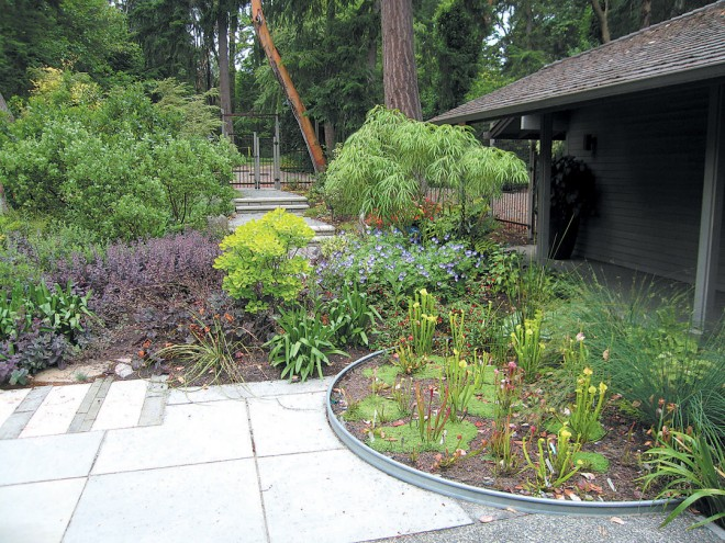 The entry garden offers a protected terrace for the owners; pitcher plants (Sarracenia species) grow in a bog garden contained within a round galvanized water tank. Photographs by RGT - See more at: http://www.pacifichorticulture.org/articles/creating-a-garden-on-the-sound/#sthash.2anuKZJ0.dpuf
