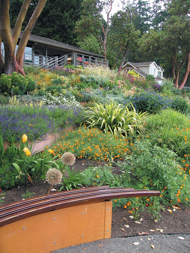 Curving retaining walls terrace the slope, their colors echoing the madrone bark - See more at: http://www.pacifichorticulture.org/articles/creating-a-garden-on-the-sound/#sthash.ANJE0Lft.dpuf
