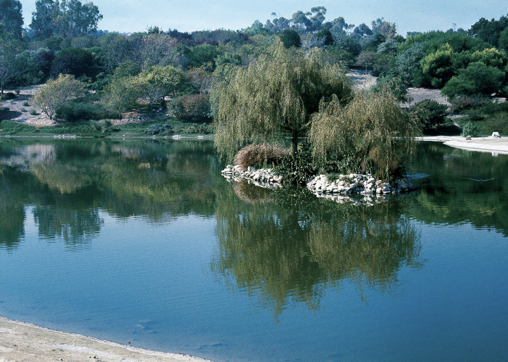 The Man Made Lake At The South Coast Botanic Garden In 1976