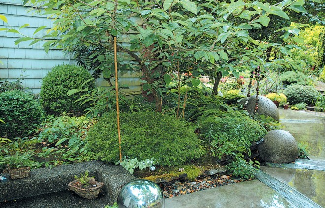 "Stone balls repeat the spheres and ""pillows"" of various boxwoods (Buxus cvs)"