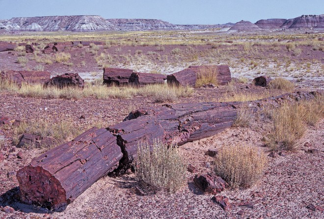 Petrified Forest National Park in Arizona contains hundreds of acres of perfectly preserved logs from an ancient tropical flood plain, over 200 million years ago
