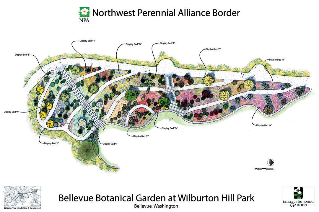 Plan Of The New Northwest Perennial Alliance Border At Bellevue Botanical Garden Design By