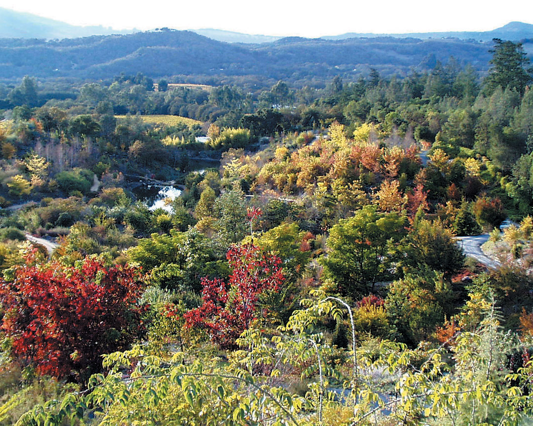 Maples (Acer) And Other Deciduous Asian Trees Add Autumn Color To An  Overview Of