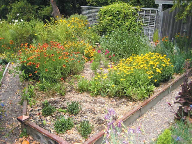 a garden in mill Valley, California, with flowering plants clustered in masses to provide greater enticement for visiting bees. photograph by Jaime pawelek