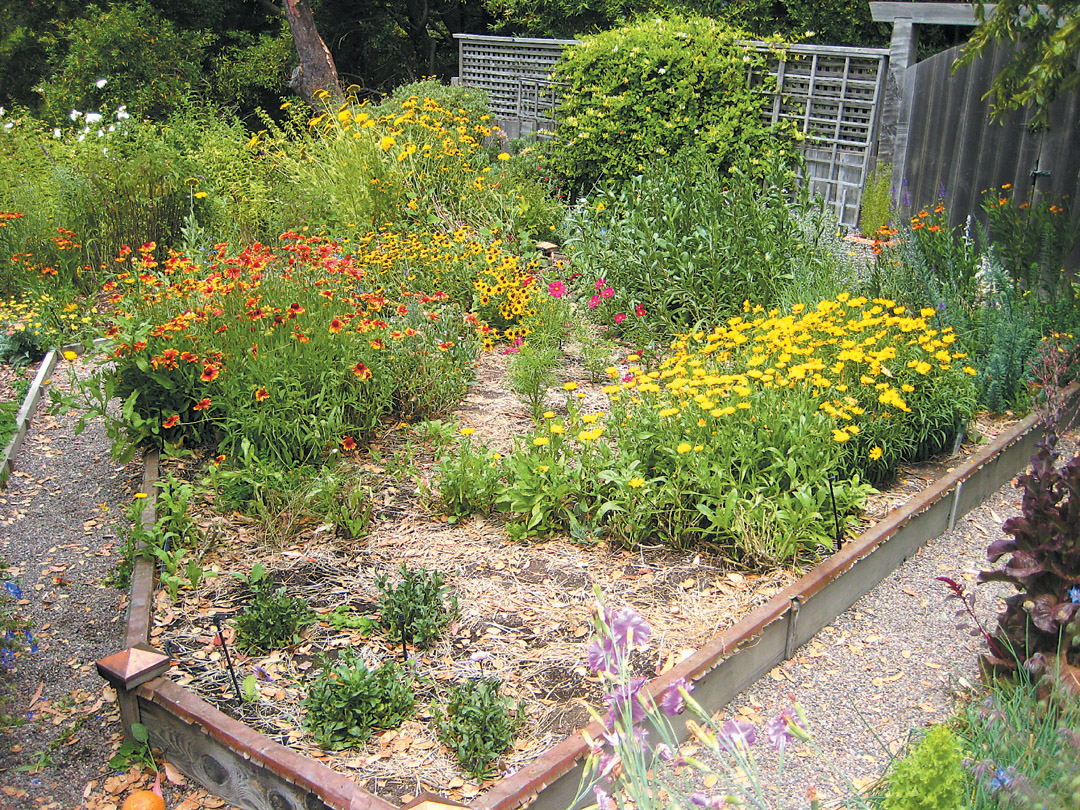 A Garden In Mill Valley, California, With Flowering Plants Clustered In  Masses To Provide